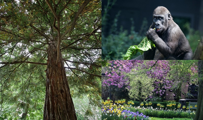 Artis nu ook botanische tuin